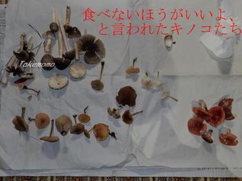 きのこ狩り-2017-10-03(2).jpg