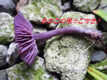 2017-09-17_きのこ (4).jpg